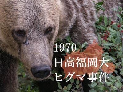 日高福岡大ヒグマ事件